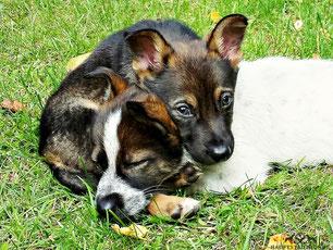 Hundebetreuung, Hundepension, Hundetagesstätte