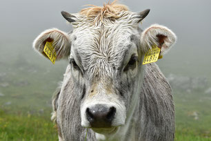 © Landwirtschaft.ch / Erna Cathomas