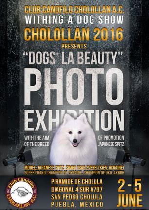 dog show, Mexico, 2016, Cholollan, Cholollan A.C., photo exhibition, Dogs` LA BEAUTY, Japanese Spitz, promotion, SIMBA TSAR ZVEREI, Piramide de Cholula, Puebla, events, affiche