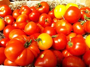Unsere  ersten Tomaten im SchloßMühlLaden, Wr. Neudorf!  Danke für das tolle Foto!