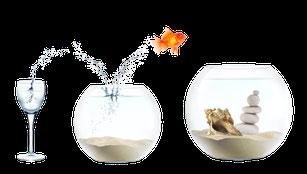 Durch Systemische Beratung Berlin springt ein Goldfisch in ein immer noch besser Aquarium.