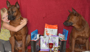 тайский_риджбек,выставка,чемпион,победитель,питомник,thairidgeback_dog,show,kursk,winner,mani_daeng_kennel