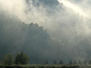 円山川の霧
