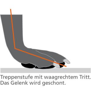Waagerechte Treppenstufen vermeiden das Abnicken und Überdehnen der Gelenke (Grafik)