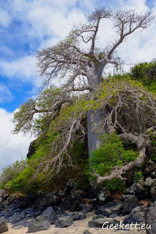 Bambo Est - Mayotte