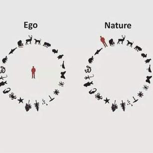 Rentrer en communication avec le vivant, les arbres, les pierres...
