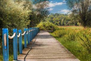Holzsteg führt durch Wiesen und Felder-Sommer