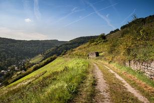 Spazierweg im Rheingau in hügeliger Landschaft und Reben