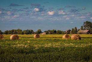 Bauernlandschaft in Polen , Strohballen und Bauernhaus