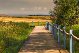 Holzsteg führt durch Felder und Wiesen-Sommer
