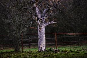 Knorriger Baum im Herbst