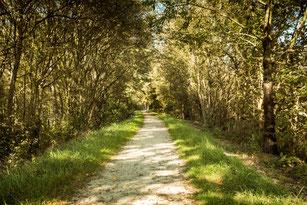 Spazierweg im grünen Park im Frühling