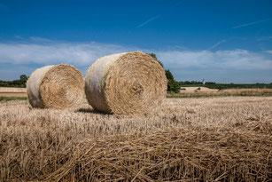 Zwei Strohballen auf abgemähtem Getreidefeld