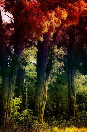 Laubbäume farbig
