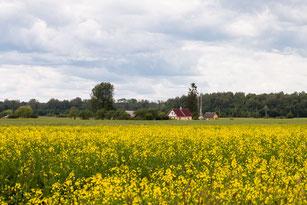 Bauernhaus in Masuren direkt am Rapsfeld