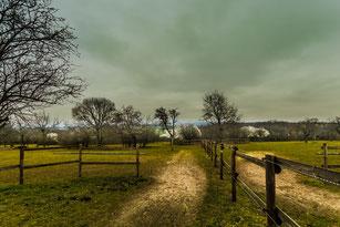 Pferdekoppel mit Bäumen und Holzzaun