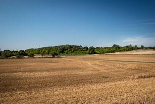 abgeerntetes Getreidefeld -blauer Himmel