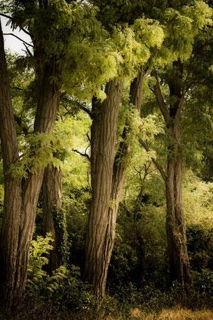 Laubbäume im Sommer-grün