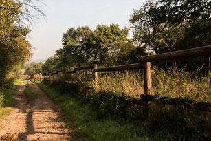 Spazierweg an der Weidekoppel mit Holzzaun