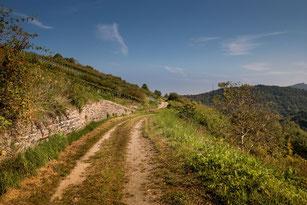 Spazierweg im Rheingau auf Anhöhe und Weinreben