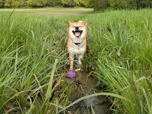 Akira hat immer ein lächeln im Gesicht
