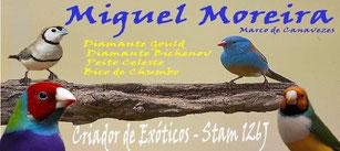 Miguel Moreira
