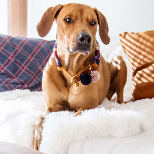 hundsoadli Halsband aus Leder und Tau