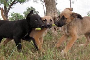 Foto Ramona Tarras Tierschutz Apulien