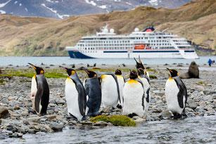 Antarktis Kreuzfahrt deutschsprachig mit HANSEATIC nature