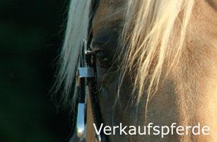 Reinhard Hochreiter bietet Beratung beim Kauf von Reining-Pferden.