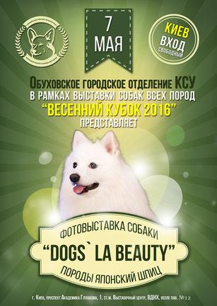 japanese shpitz spitz in Ukraine, dog show, Spring Cup 2016, Obuhovskiy city center, Ukrainian Kennel Union, may, 2016, photo exhibition, Dogs` LA BEAUTY, japanese spitz photos, white dogs photos, dogs models Kiev Ukraine