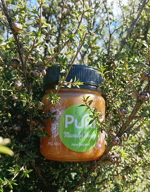 Puri Manuka Honey in Manuka tree
