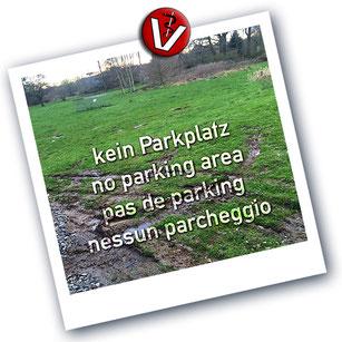 irrtümlich genutztes feuchtbiotop am Rande des Parkplatzes zur Kleintierpraxis von Dr. Birge Herkt