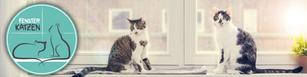 Fensterkatzen - Katzenblog