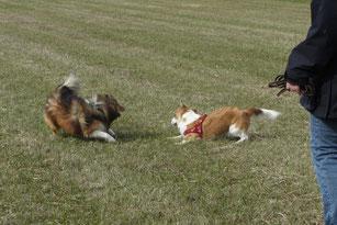 Sind Hunde kaum zu bremsen, haben sie eventuell nie Ruhe gelernt