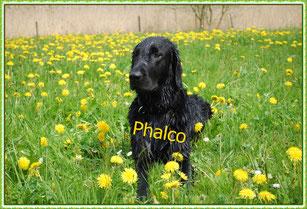 Phalco