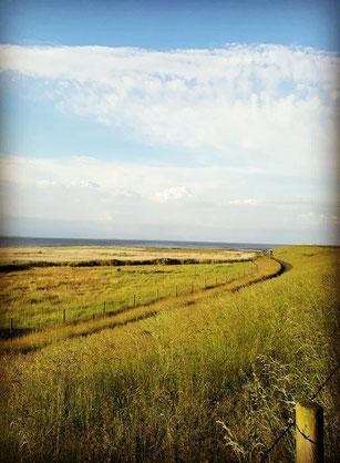 Grüner Deich, im Hintergrund Strand und Meer - blauer Himmel mit kleinen Wolken