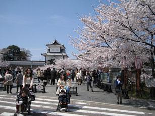 兼六園側から石川門と桜を望む
