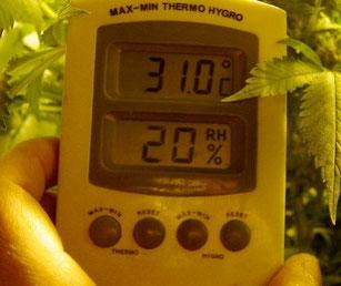 Licht und Temperatur Hanfsamen Keimung