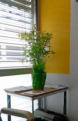"""L'érable ! (un acer palmatum """"orange dream"""") !"""