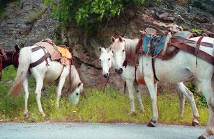trittsichere Pferde besorgten den Transport