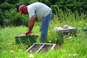 ein Imker setzte gerade seine Bienen-Völker aus