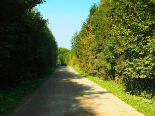 auf Naturstrassen fuhren wir weiter in Richtung Süden
