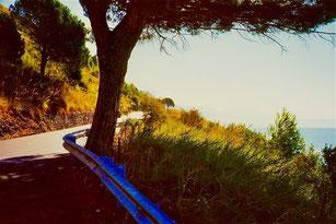 wohltuenden Schatten boten die alten Pinien-Bäume