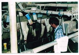 Traite des vaches 2003