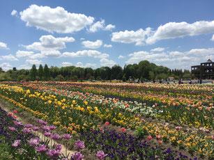 庭づくり 備北丘陵公園 庄原 ガーデニング 広島 廿日市