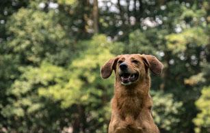 Puber cursus Hondenschool De Lijn