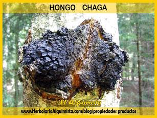 Hongo Chaga Herbolario Alquimista Arrecife Lanzarote