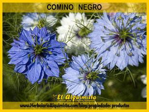 Comino Negro Herbolario Alquimista Arrecife Lanzarote