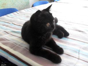 Blacky  (15 Wochen alt)